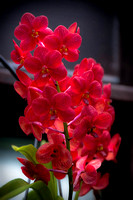 orchid-lizwelch-3064
