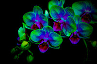 orchid-lizwelch-3031