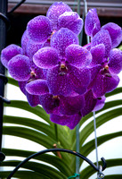 orchid-lizwelch-3061