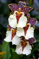 orchid-lizwelch-2994